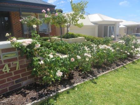 Garden maintenance service in Mandurah - Patch Horticulture